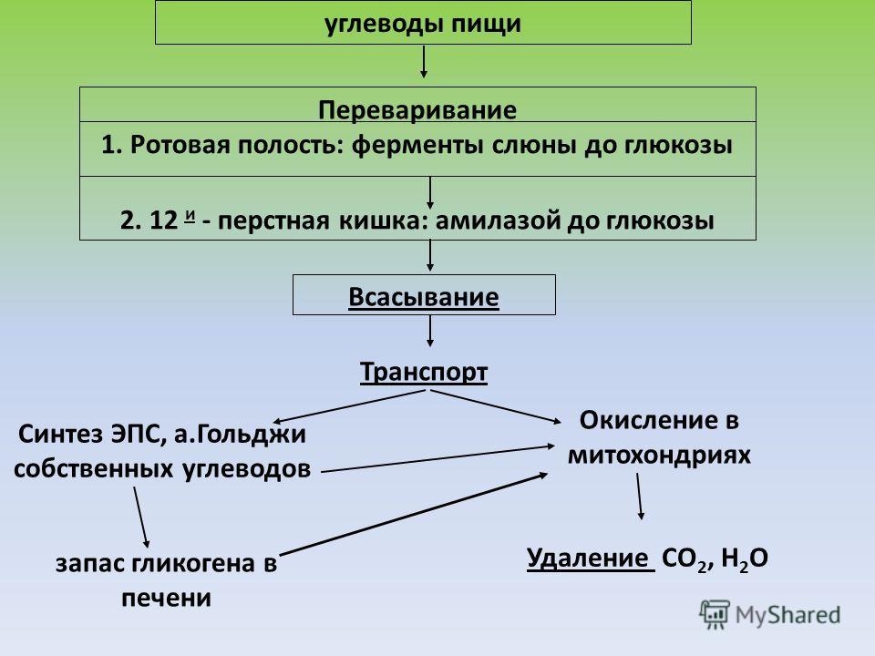 углеводы пищи Переваривание 1. Ротовая полость: ферменты слюны до глюкозы 2. 12 и - перстная кишка: амилазой до глюкозы Всасывание Транспорт Синтез ЭПС, а.Гольджи собственных углеводов Окисление в митохондриях Удаление СО 2, Н 2 О запас гликогена в п