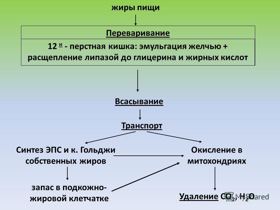 жиры пищи Переваривание 12 и - перстная кишка: эмульгация желчью + расщепление липазой до глицерина и жирных кислот Всасывание Транспорт Синтез ЭПС и к. Гольджи собственных жиров Окисление в митохондриях Удаление СО 2, Н 2 О запас в подкожно- жировой