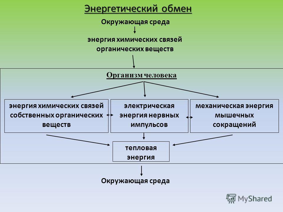 Окружающая среда Организм человека энергия химических связей органических веществ энергия химических связей собственных органических веществ электрическая энергия нервных импульсов механическая энергия мышечных сокращений тепловая энергия Окружающая