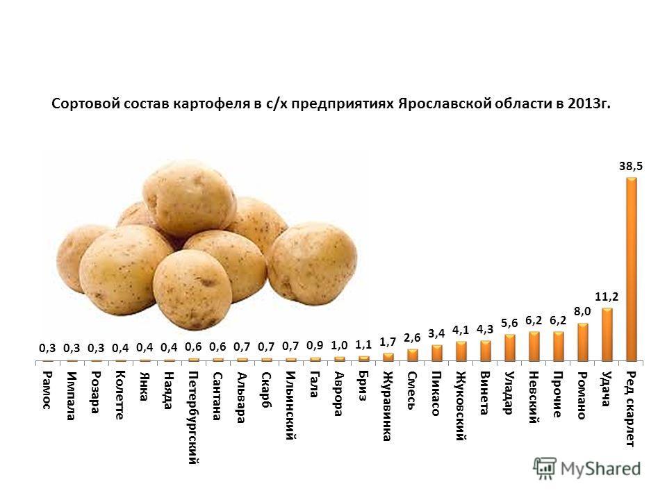 Сортовой состав картофеля в с/х предприятиях Ярославской области в 2013г.