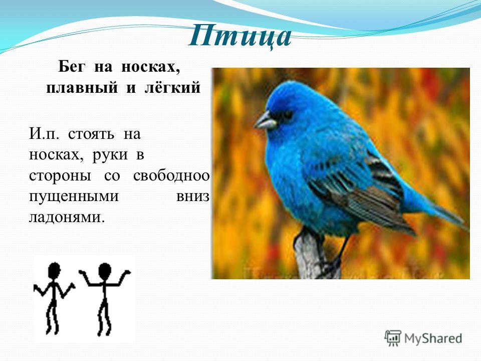 Птица Бег на носках, плавный и лёгкий И.п. стоять на носках, руки в стороны со свободноо пущенными вниз ладонями.