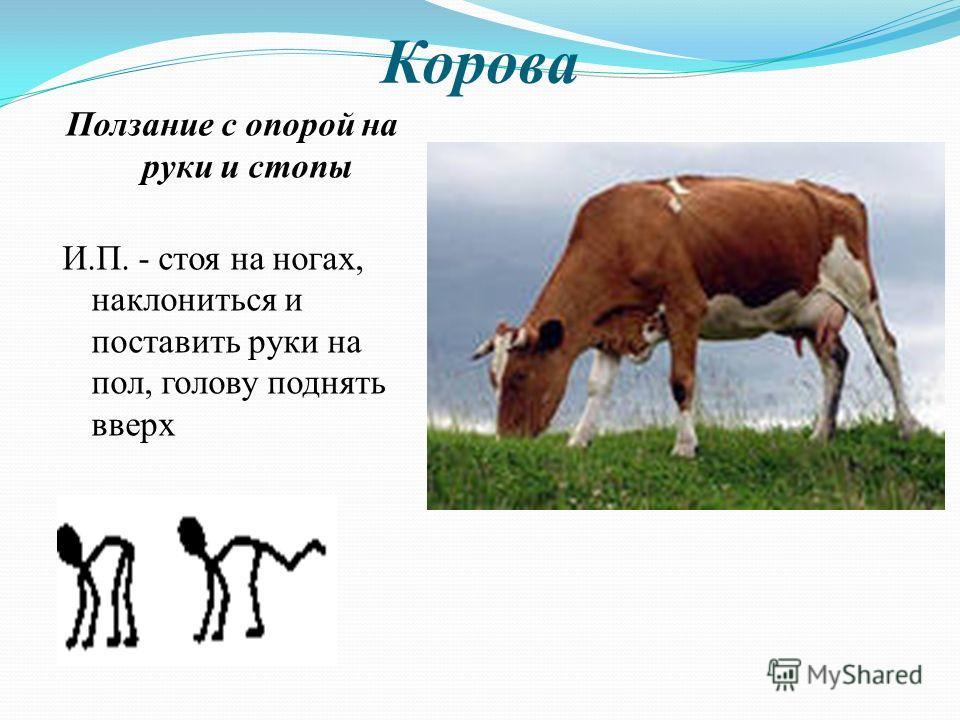 Корова Ползание с опорой на руки и стопы И.П. - стоя на ногах, наклониться и поставить руки на пол, голову поднять вверх
