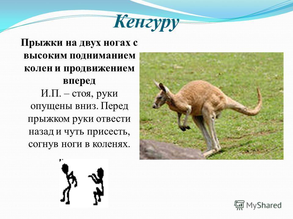 Кенгуру Прыжки на двух ногах с высоким подниманием колен и продвижением вперед И.П. – стоя, руки опущены вниз. Перед прыжком руки отвести назад и чуть присесть, согнув ноги в коленях.