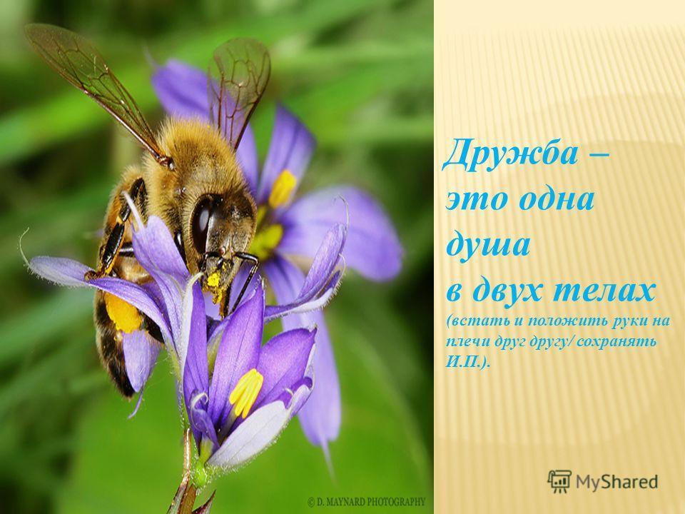 Дружба – это одна душа в двух телах (встать и положить руки на плечи друг другу/ сохранять И.П.).