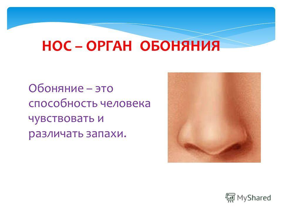 Обоняние – это способность человека чувствовать и различать запахи. НОС – ОРГАН ОБОНЯНИЯ