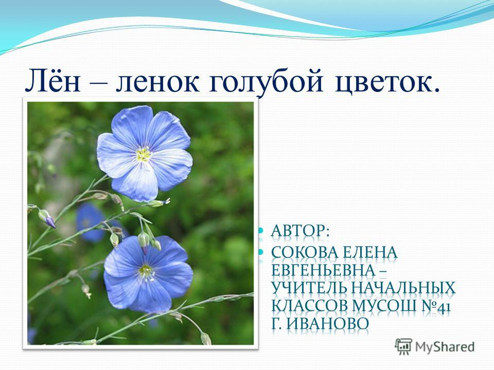 Лён – ленок голубой цветок.