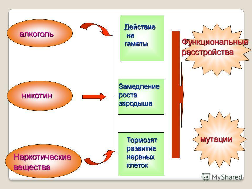 алкоголь никотин Наркотические вещества Действие на нагаметы Замедление роста зародыша Тормозят развитие нервных клеток Функциональные расстройства мутации