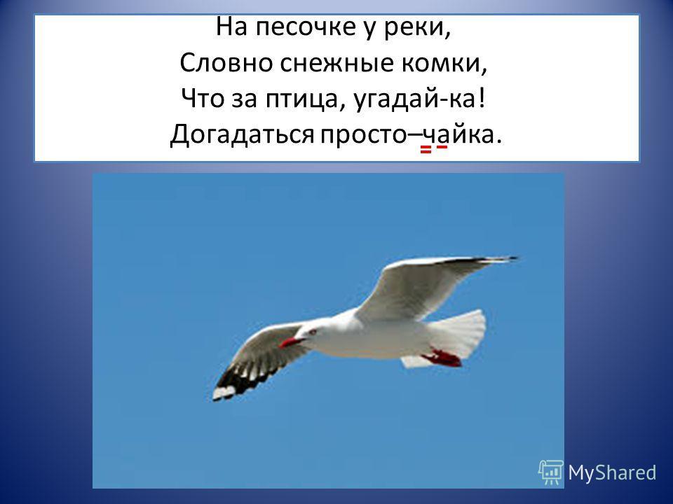 На песочке у реки, Словно снежные комки, Что за птица, угадай-ка! Догадаться просто–чайка.