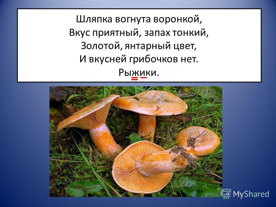 Шляпка вогнута воронкой, Вкус приятный, запах тонкий, Золотой, янтарный цвет, И вкусней грибочков нет. Рыжики.