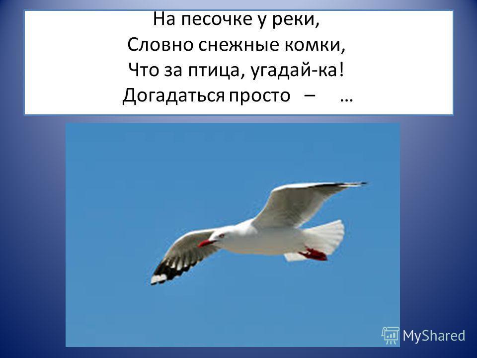 На песочке у реки, Словно снежные комки, Что за птица, угадай-ка! Догадаться просто – …