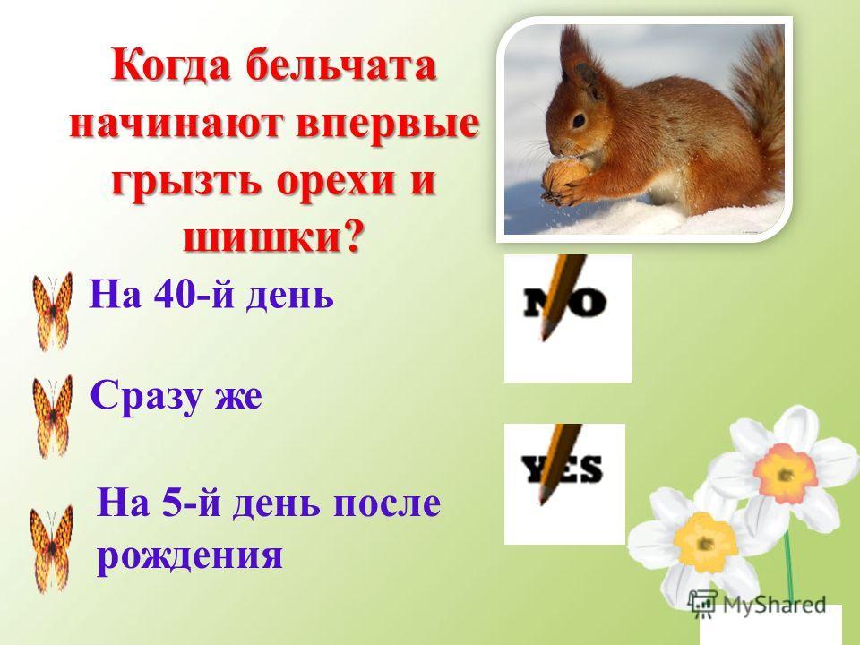 Вопросы третьего тура Кто из перечисленных животных строит самые прочные жилища? Бобры Термиты Муравьи
