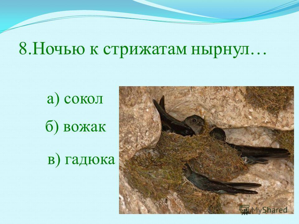 8.Ночью к стрижатам нырнул… б) вожак а) сокол в) гадюка