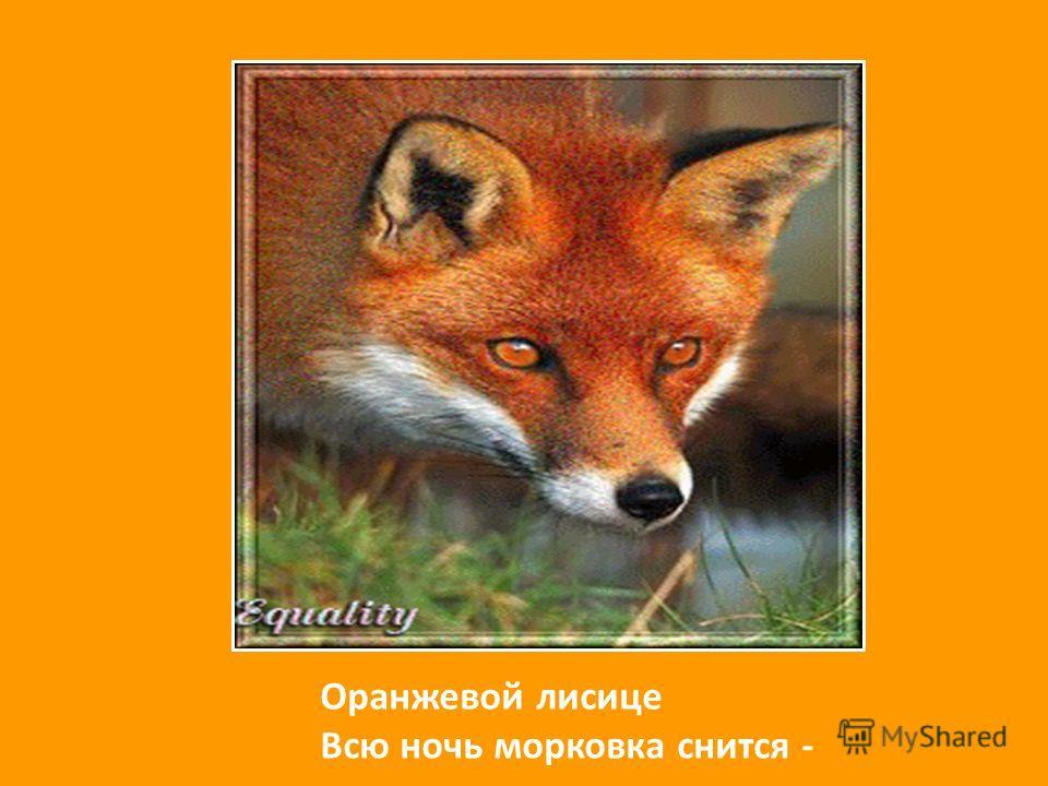 Оранжевой лисице Всю ночь морковка снится -