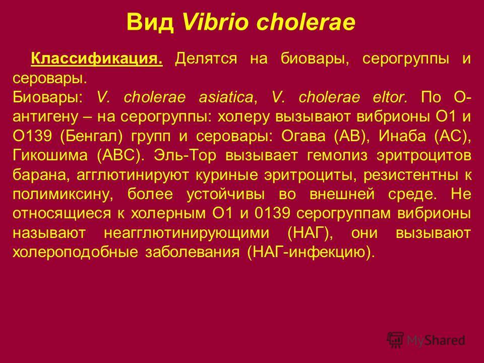 Вид Vibrio cholerae Классификация. Делятся на биовары, серогруппы и серовары. Биовары: V. cholerae asiatica, V. cholerae eltor. По О- антигену – на серогруппы: холеру вызывают вибрионы О1 и О139 (Бенгал) групп и серовары: Огава (АВ), Инаба (АС), Гико