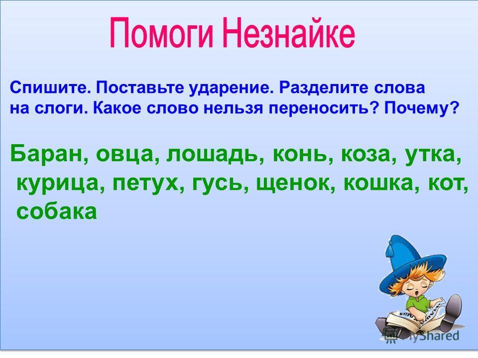Спишите. Поставьте ударение. Разделите слова на слоги. Какое слово нельзя переносить? Почему? Баран, овца, лошадь, конь, коза, утка, курица, петух, гусь, щенок, кошка, кот, собака