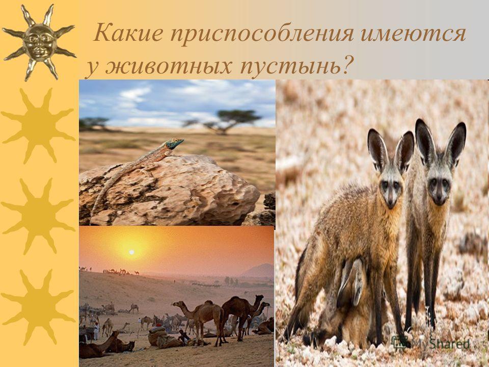 18 Какие приспособления имеются у животных пустынь?