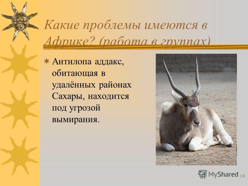 19 Какие проблемы имеются в Африке? (работа в группах) Антилопа аддакс, обитающая в удалённых районах Сахары, находится под угрозой вымирания.