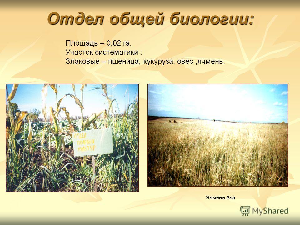 Отдел общей биологии: Площадь – 0,02 га. Участок систематики : Злаковые – пшеница, кукуруза, овес,ячмень. Ячмень Ача