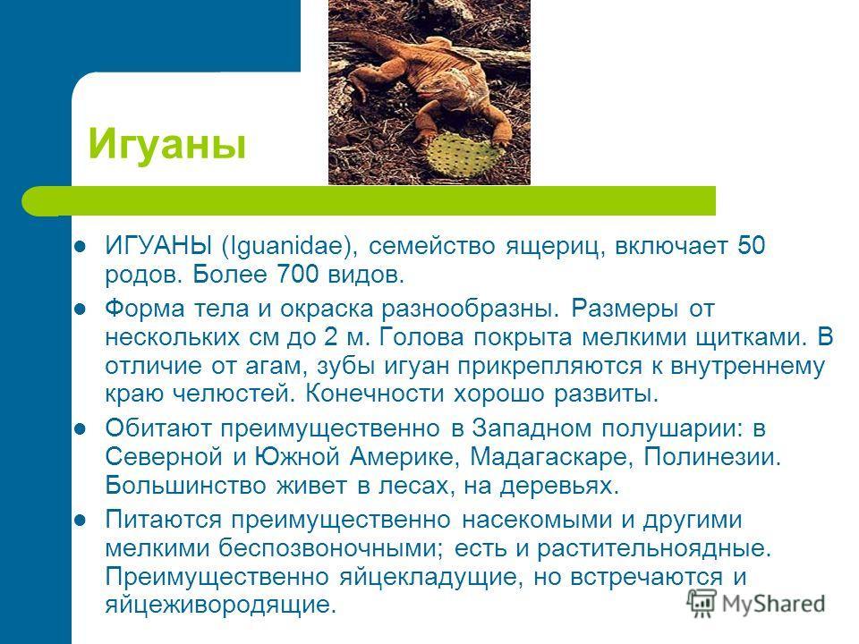Игуаны ИГУАНЫ (Iguanidae), семейство ящериц, включает 50 родов. Более 700 видов. Форма тела и окраска разнообразны. Размеры от нескольких см до 2 м. Голова покрыта мелкими щитками. В отличие от агам, зубы игуан прикрепляются к внутреннему краю челюст