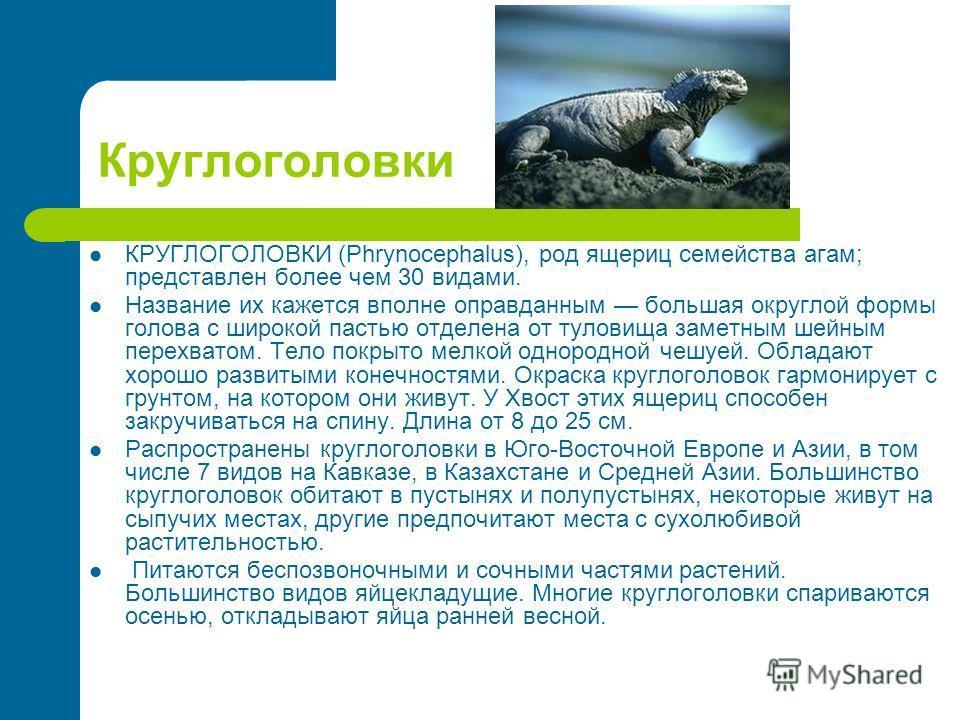 Круглоголовки КРУГЛОГОЛОВКИ (Phrynocephalus), род ящериц семейства агам; представлен более чем 30 видами. Название их кажется вполне оправданным большая округлой формы голова с широкой пастью отделена от туловища заметным шейным перехватом. Тело покр