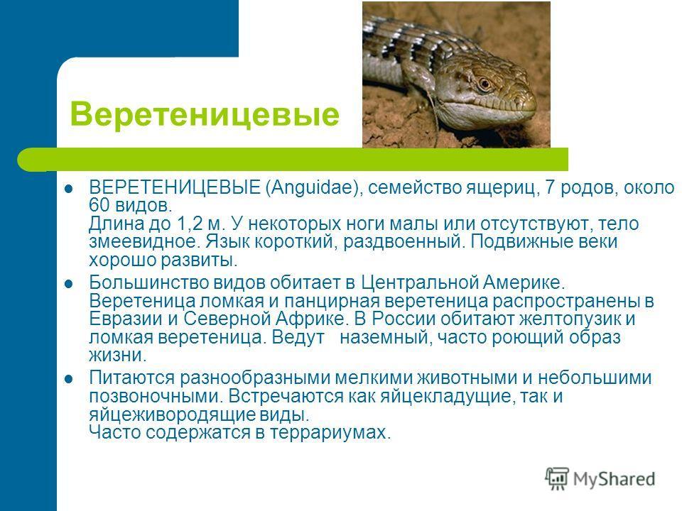 Веретеницевые ВЕРЕТЕНИЦЕВЫЕ (Anguidae), семейство ящериц, 7 родов, около 60 видов. Длина до 1,2 м. У некоторых ноги малы или отсутствуют, тело змеевидное. Язык короткий, раздвоенный. Подвижные веки хорошо развиты. Большинство видов обитает в Централь