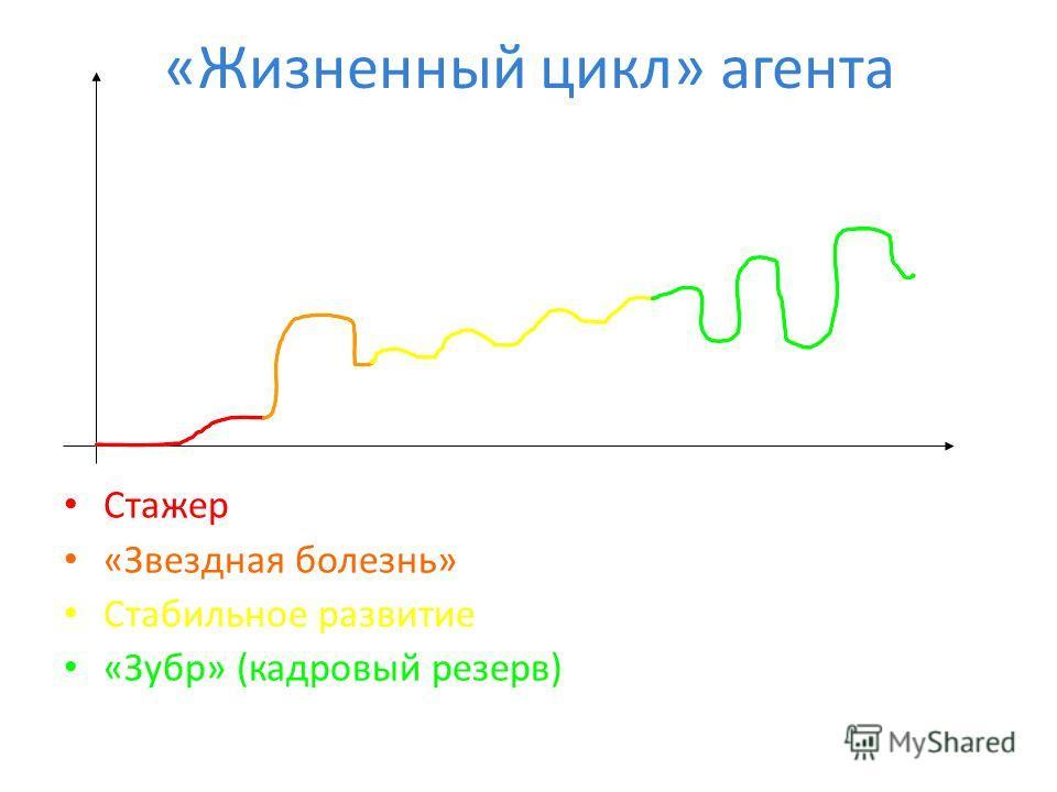 «Жизненный цикл» агента Стажер «Звездная болезнь» Стабильное развитие «Зубр» (кадровый резерв)