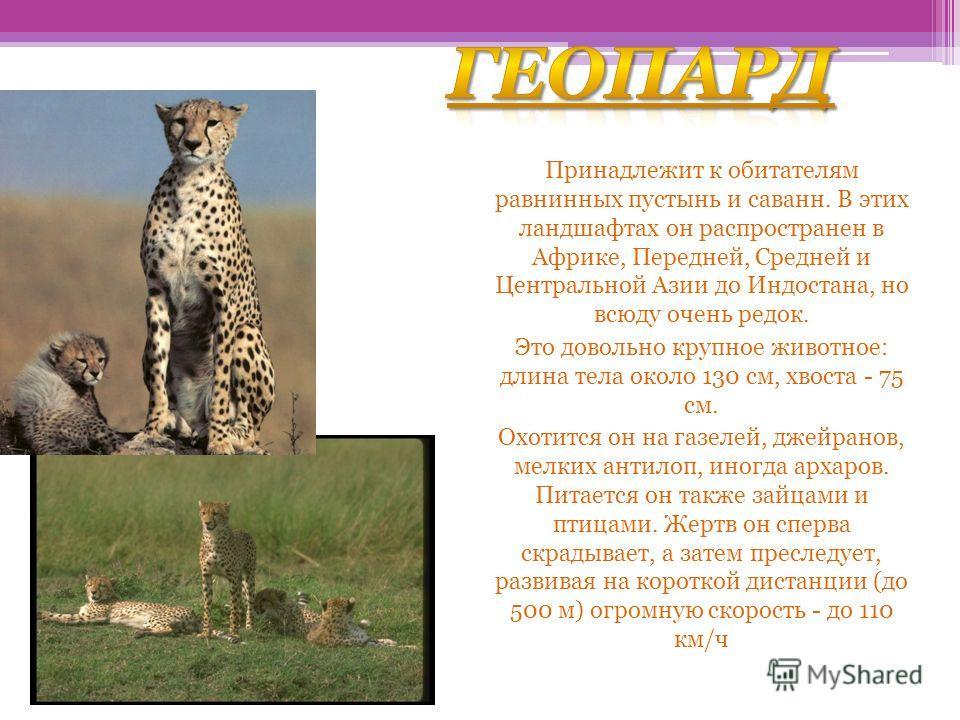 геопард Принадлежит к обитателям равнинных пустынь и саванн. В этих ландшафтах он распространен в Африке, Передней, Средней и Центральной Азии до Индостана, но всюду очень редок. Это довольно крупное животное: длина тела около 130 см, хвоста - 75 см.