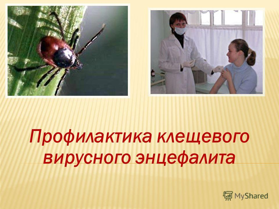 Профилактика клещевого вирусного энцефалита