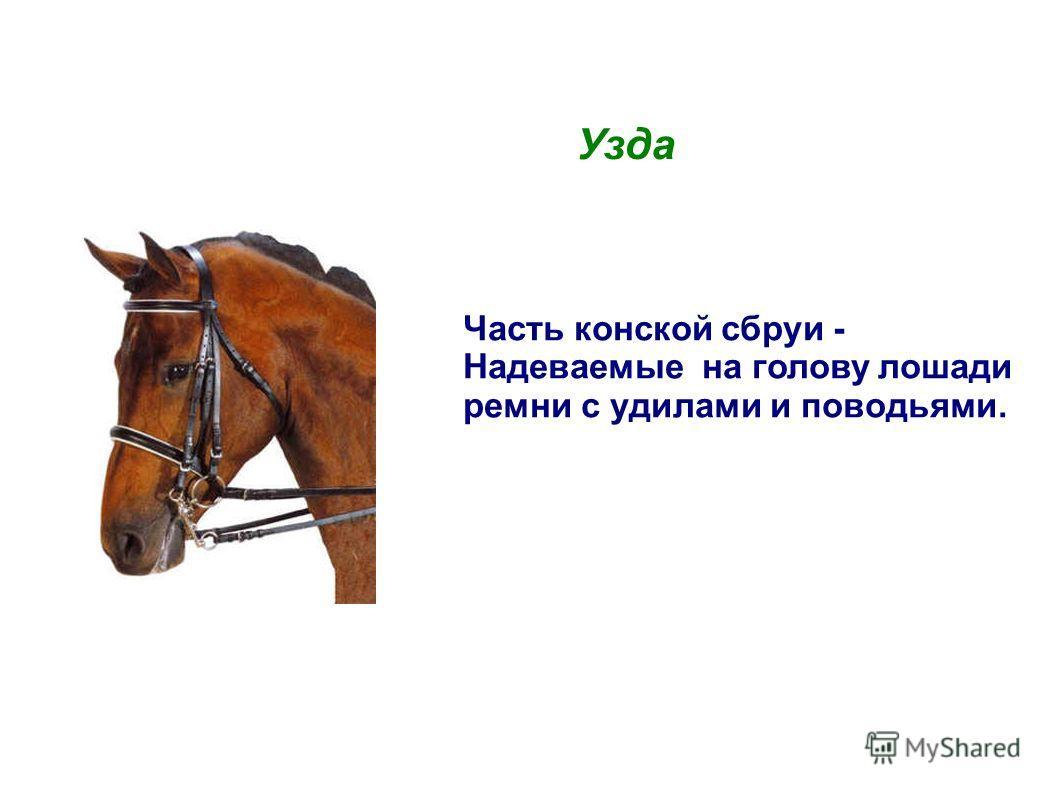 Узда Часть конской сбруи - Надеваемые на голову лошади ремни с удилами и поводьями.