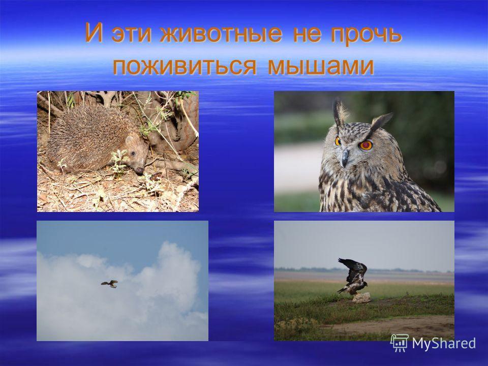 И эти животные не прочь поживиться мышами