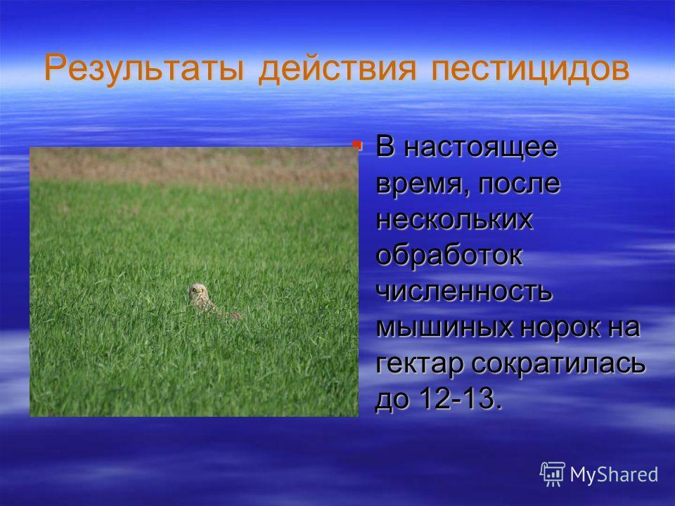 Результаты действия пестицидов В настоящее время, после нескольких обработок численность мышиных норок на гектар сократилась до 12-13. В настоящее время, после нескольких обработок численность мышиных норок на гектар сократилась до 12-13.