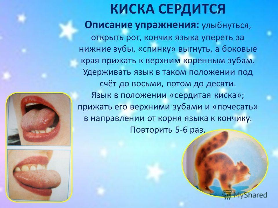 КИСКА СЕРДИТСЯ Описание упражнения: улыбнуться, открыть рот, кончик языка упереть за нижние зубы, «спинку» выгнуть, а боковые края прижать к верхним коренным зубам. Удерживать язык в таком положении под счёт до восьми, потом до десяти. Язык в положен