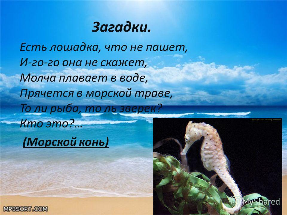 Загадки. Есть лошадка, что не пашет, И-го-го она не скажет, Молча плавает в воде, Прячется в морской траве, То ли рыба, то ль зверек? Кто это?… (Морской конь)