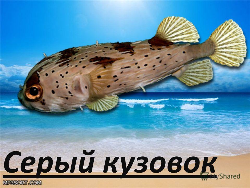 Про рыб презентация