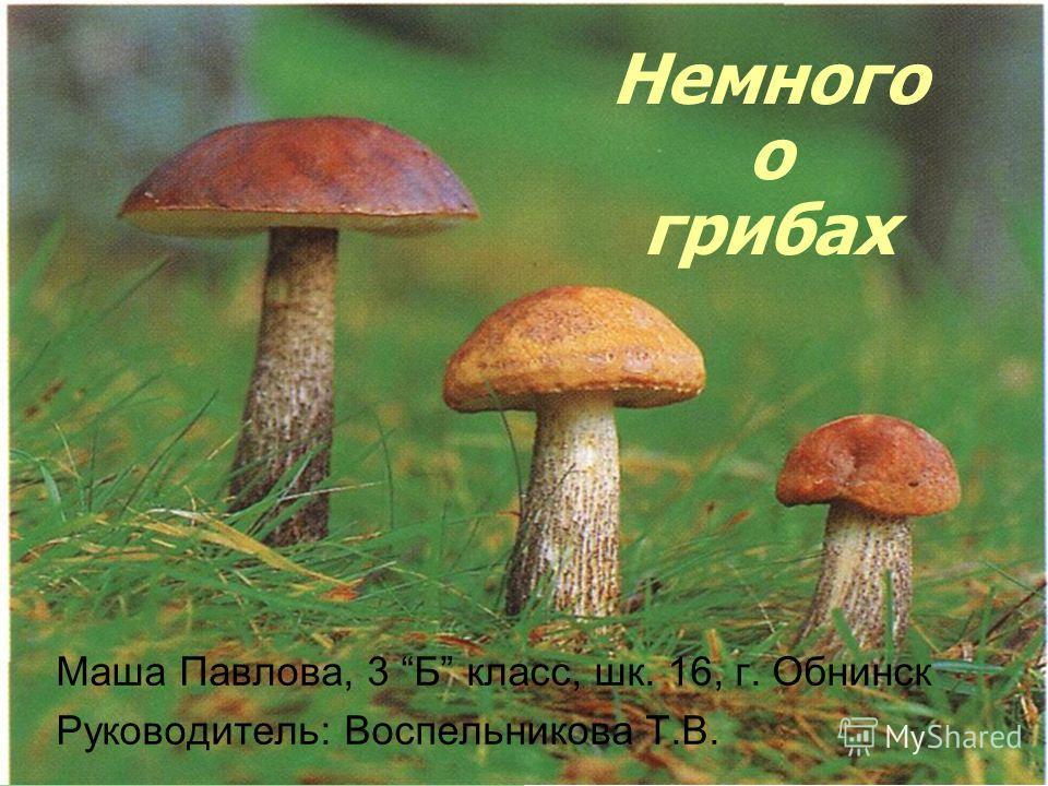 Немного о грибах Маша Павлова, 3 Б класс, шк. 16, г. Обнинск Руководитель: Воспельникова Т.В.