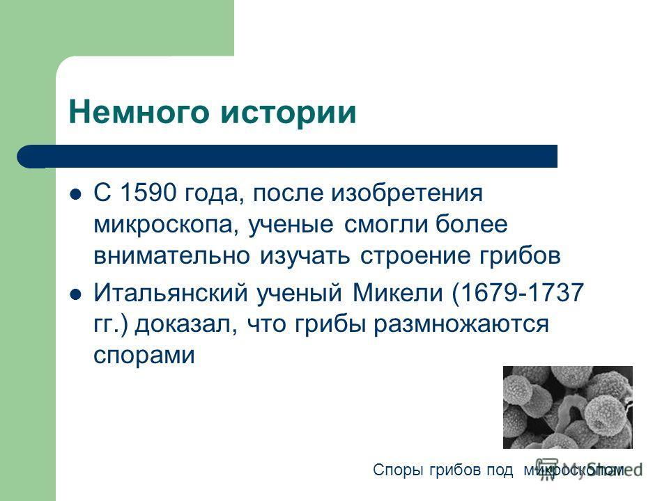 Немного истории С 1590 года, после изобретения микроскопа, ученые смогли более внимательно изучать строение грибов Итальянский ученый Микели (1679-1737 гг.) доказал, что грибы размножаются спорами Споры грибов под микроскопом
