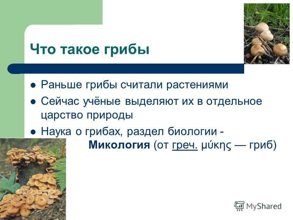 Что такое грибы Раньше грибы считали растениями Сейчас учёные выделяют их в отдельное царство природы Наука о грибах, раздел биологии - Микология (от греч. μύκης гриб)греч.