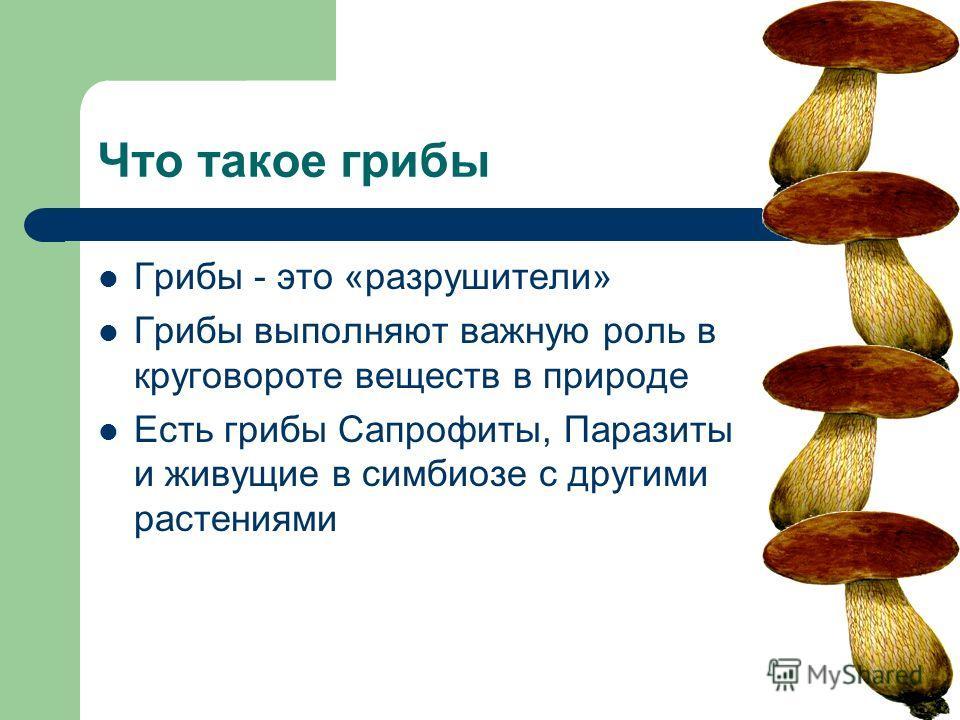 Что такое грибы Грибы - это «разрушители» Грибы выполняют важную роль в круговороте веществ в природе Есть грибы Сапрофиты, Паразиты и живущие в симбиозе с другими растениями