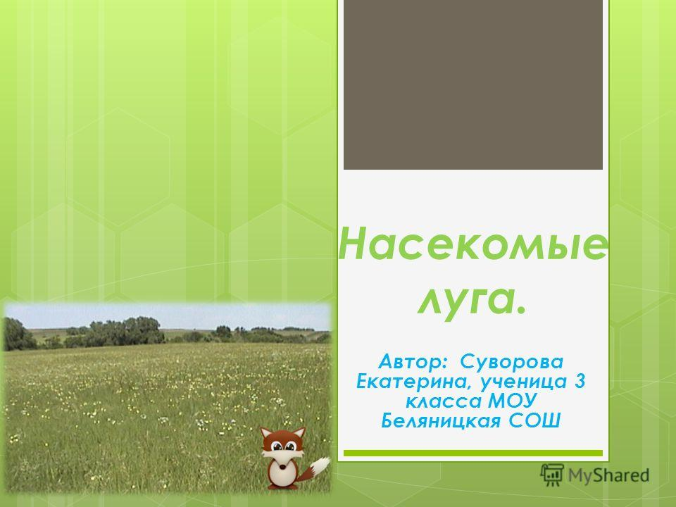 Насекомые луга. Автор: Суворова Екатерина, ученица 3 класса МОУ Беляницкая СОШ