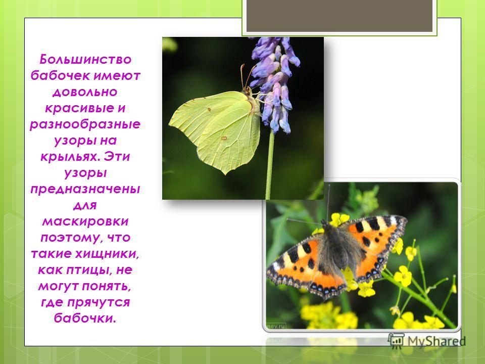 Большинство бабочек имеют довольно красивые и разнообразные узоры на крыльях. Эти узоры предназначены для маскировки поэтому, что такие хищники, как птицы, не могут понять, где прячутся бабочки.