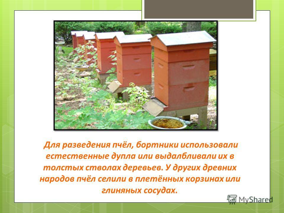 Для разведения пчёл, бортники использовали естественные дупла или выдалбливали их в толстых стволах деревьев. У других древних народов пчёл селили в плетённых корзинах или глиняных сосудах.
