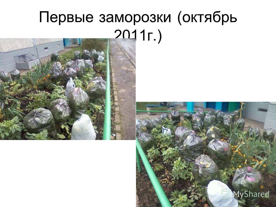 Первые заморозки (октябрь 2011г.)