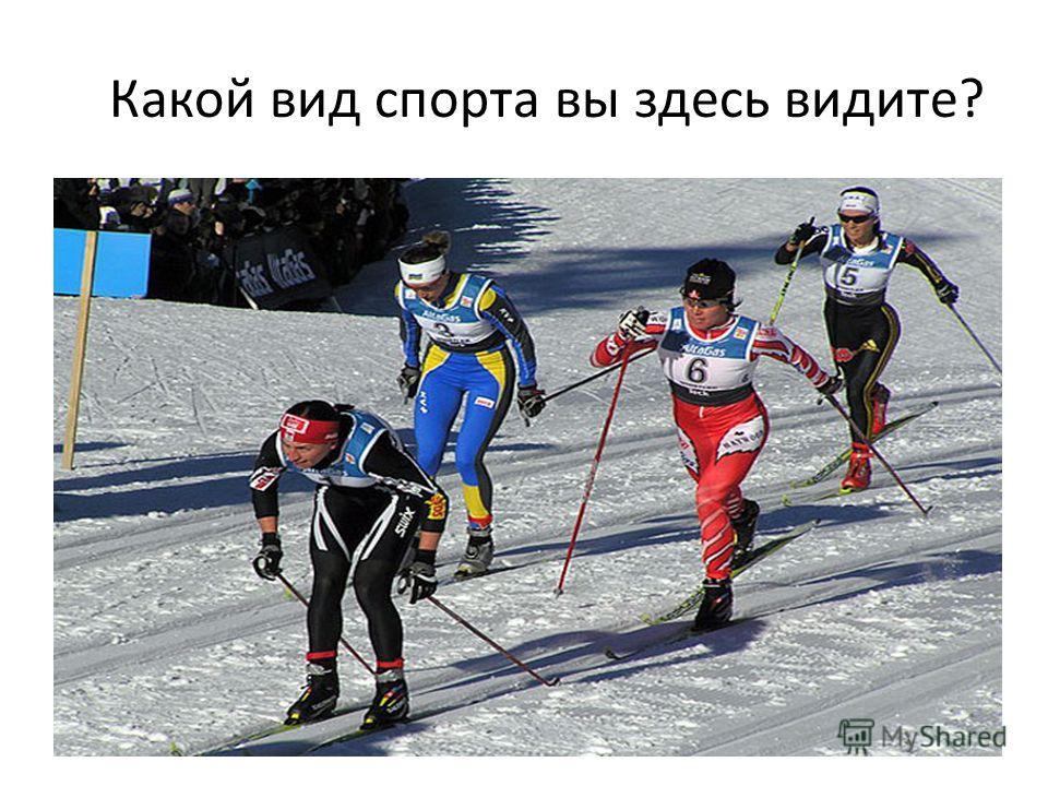 Какой вид спорта вы здесь видите?