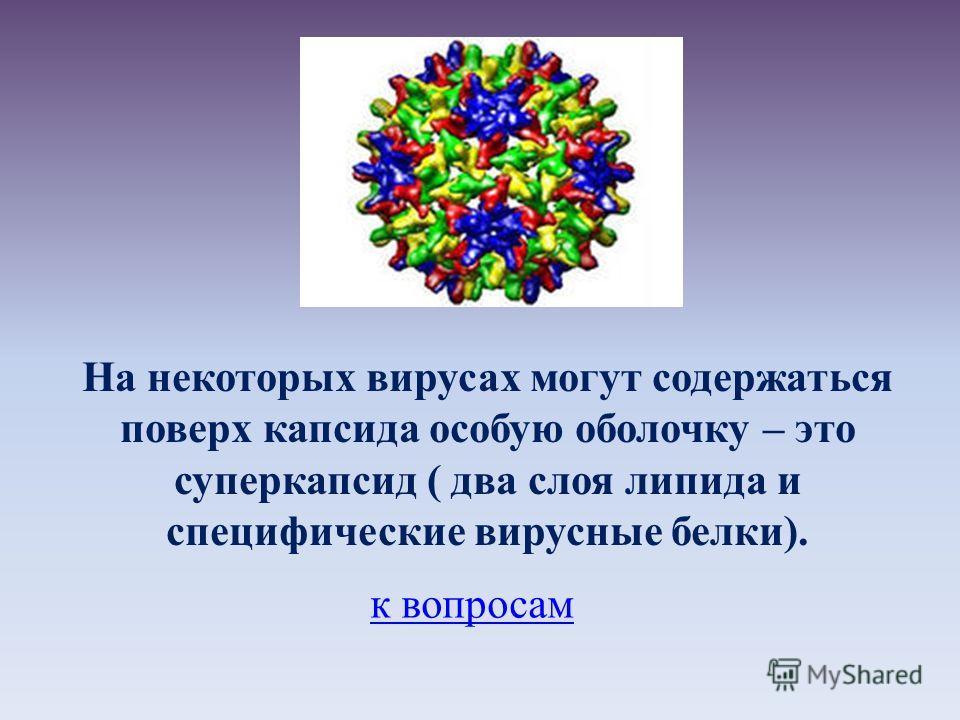 На некоторых вирусах могут содержаться поверх капсида особую оболочку – это суперкапсид ( два слоя липида и специфические вирусные белки). к вопросам