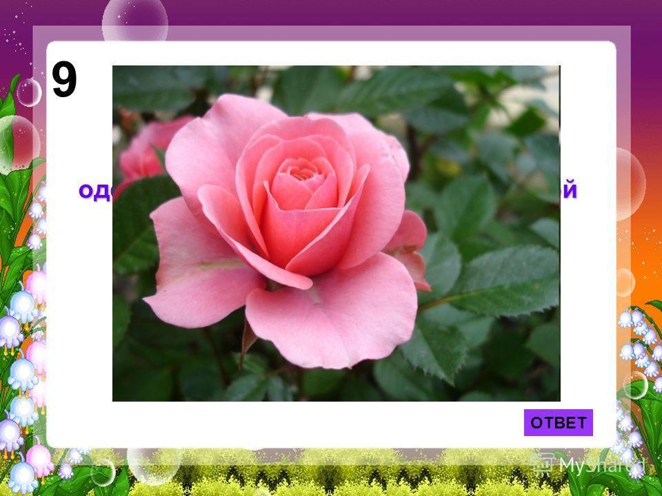 ОТВЕТ 9 Лепесток какого цветка служил одеялом Дюймовочке из одноименной сказки Г. Х. Андерсена?