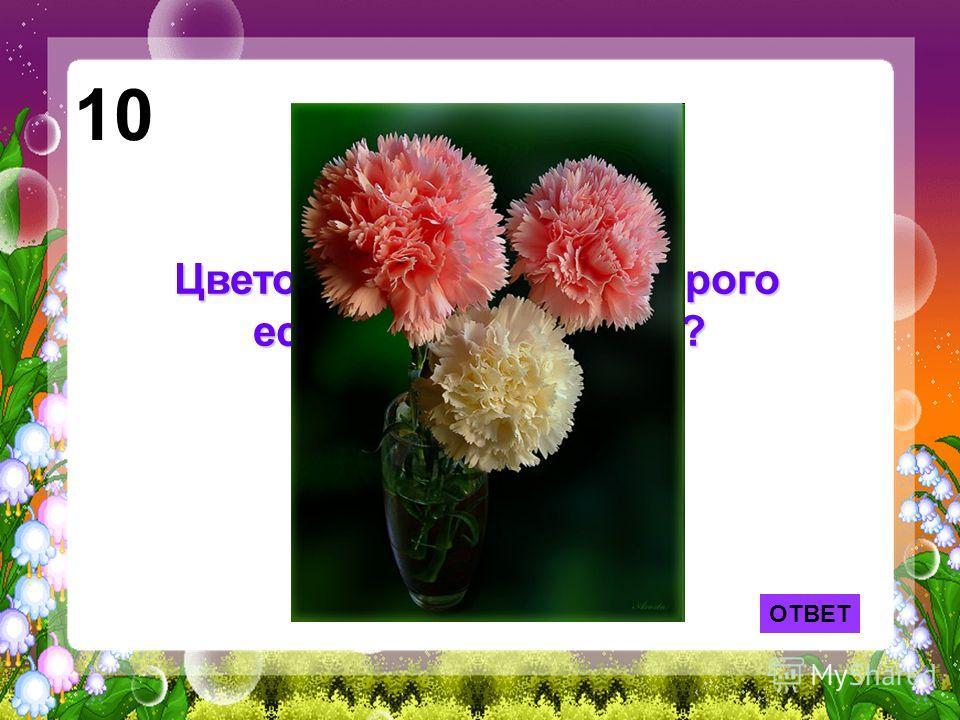 ОТВЕТ 10 Цветок, в названии которого есть кусочек железа?