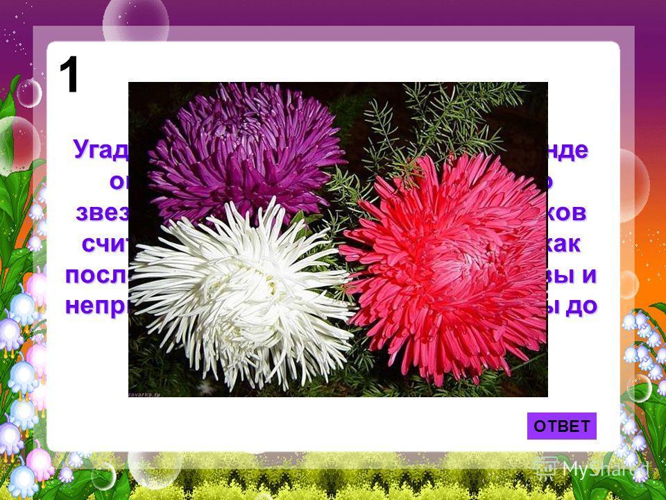 Угадайте, что это за цветок? По легенде он вырос из пылинки, упавшей со звезды. Это растение у древних греков считалось амулетом. Его цветки как последняя улыбка осени. Они красивы и неприхотливы выдерживая морозы до семи градусов. 1 ОТВЕТ