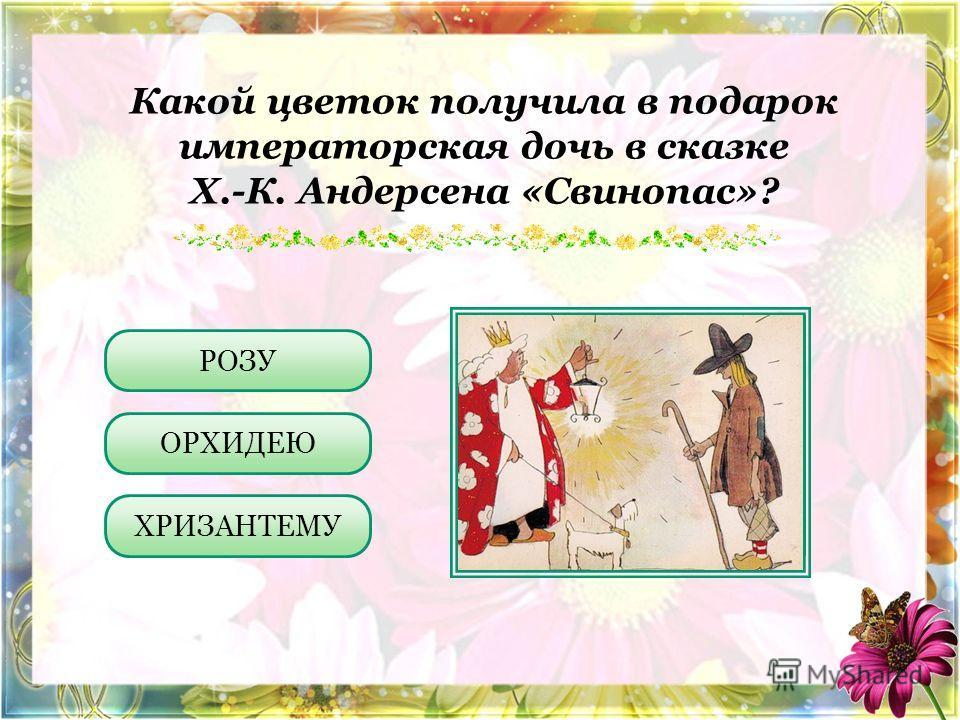Какой цветок получила в подарок императорская дочь в сказке Х.-К. Андерсена «Свинопас»? ОРХИДЕЮ ХРИЗАНТЕМУ РОЗУ