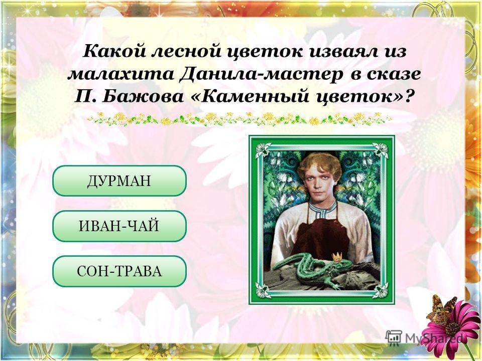 Какой лесной цветок изваял из малахита Данила-мастер в сказе П. Бажова «Каменный цветок»? ИВАН-ЧАЙ СОН-ТРАВА ДУРМАН