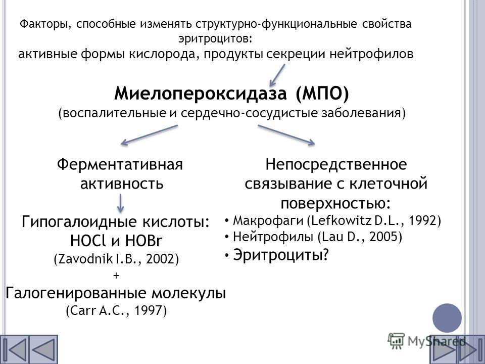 Факторы, способные изменять структурно-функциональные свойства эритроцитов: активные формы кислорода, продукты секреции нейтрофилов Миелопероксидаза (МПО) (воспалительные и сердечно-сосудистые заболевания) Ферментативная активность Гипогалоидные кисл